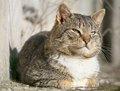 ネコを飼うと「胃がん」「統合失調症」になる!? 死よりも怖いペットを飼うリスク8選