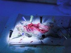 【閲覧注意】解剖したネコの腸で縄跳びする高校生! カオス化するアメリカの解剖実習