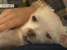 強制交配・出産ループの末、食用犬として出荷……韓国「子犬製造工場」の実態に怒りの声