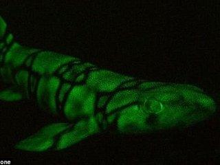 【深海でネオンのように光る謎の生物とは?