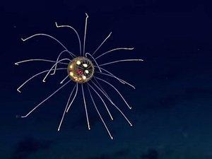【衝撃映像】地球外生命体としか思えない! マリアナ海溝で完全に「新種のクラゲ」が発見される