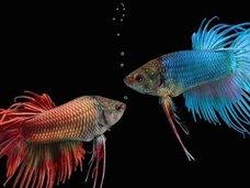 """「首アリ魚」は存在するのか? 生物の進化で判明した""""首""""の役割とは?"""
