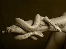 """奇習! 逞しく太いヘビを秘部に挿入し…! 貞淑妻の""""孤独""""を満たす性技「マムシオナニー」=東北地方"""