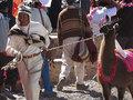 【閲覧注意】とめどなく滴る鮮血…! 新年を祝福するために斬首される生贄のラマ=ボリビア