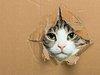日経新聞がコラムで赤っ恥! 「シュレーディンガーの猫」と「バタフライ効果」を大胆に間違える!?