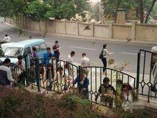 プチ仏教ブームの中国で、スズメ数千羽が大量死! 成り金の浅はかな信仰心の犠牲になる野生生物たち