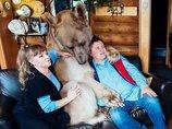 体長2メートルの巨大ヒグマと暮らす夫婦 ― 23年間家族のようにクマと暮らす=ロシア