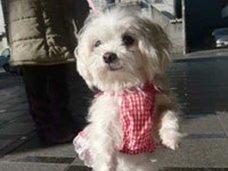 「お前も同じ目に遭わせてやる!」恋人への腹いせに、韓国人男性がペットの子犬2匹を惨殺