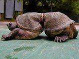 【衝撃】海に捨てられたゴミで苦しむ動物たちの絶望的姿! 無言の訴えに涙…