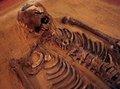 2500年前の若い男「アーチー」の骸骨をゲノム解析!古代フェニキア人の謎に近づく!?