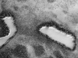 """火星で樹木に囲まれた""""砂漠のオアシス""""が発見される! 「魚類や水棲生物が存在している可能性も」"""