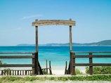 不倫、謎のドリンク、妖怪…現代日本に残された最後の秘境・奄美大島7つの魅力