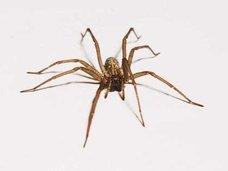 クモ嫌い克服のために50匹以上の毒グモと生活!?