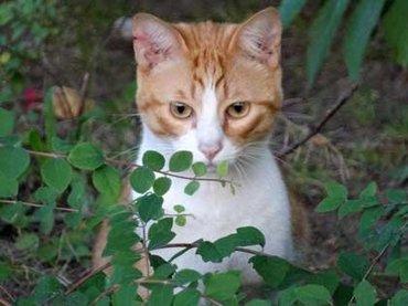 猫のフンでがん治療?