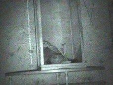 【動画】ケースに封印された「呪われた人形」が動く瞬間! 研究歴17年の美女調査官が捉えた衝撃映像とは?