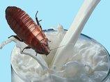 スーパーフードの大本命「ゴキブリミルク」を飲め! 牛乳の4倍の栄養価、ケール、キノア、アサイー、ココナッツオイルをも完全に上回る
