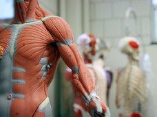 頭から角の生えた女性、結合双生児の人体、顔面を覆う大量のイボが見られる博物館