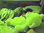 【心霊動画】テディベア、むっくりと起き上がり女児に襲いかかる! 悪霊のレイプ未遂か!?