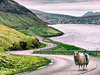 羊でストリートビューを作った「シープビュー」に超感動! Googleに見放された島のチャレンジが本家を凌いだ!