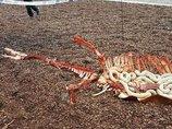 ネッシーの残骸が岸に打ち上げられた!? 白い臓物まで…!=スコットランド