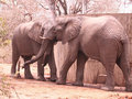 【閲覧注意】ゾウがブチ切れて凶暴化! 人間をボールのように扱って殺害するまで