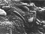 【ガチ】火星の隕石「ALH84001」に生物付着!? NASAが20年間本気で悩み続ける「生命の痕」