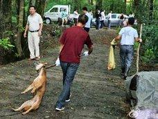 """中国農村で""""犬皆殺し令""""発令! 大量処分の背景に、犬食文化の後退か"""
