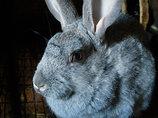 【閲覧注意】ウサギの体を貪る、超絶大量のウジ虫! 目がバカになるレベル