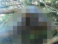 【衝撃】オーストラリアで発見された不気味なUMA死骸写真! 理学博士がトカナに緊急コメント寄せる