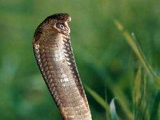 自撮りをしようとしてヘビに噛まれる惨事が発生