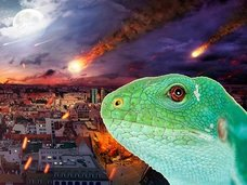 動物の地震予知能力について獣医師が語る! トカゲの行動は要チェック!!