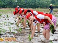 泥まみれのナマ足に大興奮! 中国・スッチーの卵たちが毎年恒例の稲刈り