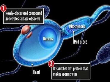 「精子を泳げなくする」男性用ピルが登場間近! セックス直前に飲むだけ、数日後には元通り(最新研究)