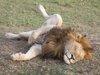 """人間にも当てはまる「動物寝相占い」! シカはハーレム暮らし、オランウータンはレイプ魔、草食系は""""繁殖系""""だった!?"""