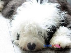 悲劇……韓国・迷子犬が近隣住人に食べられた!