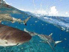 シャークウォッチング中にサメが檻に侵入!