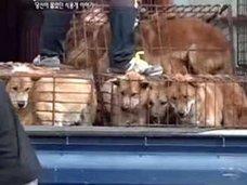 食用犬工場のずさんな管理実態に、韓国内で白熱する「犬食文化」への賛否! なぜかイギリスも介入で……