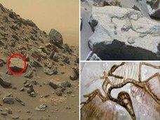 【画像】火星で「始祖鳥」の化石を発見!? 3億年前の火星は生物たちの楽園だった可能性