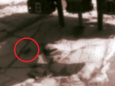 NASA火星探査機が「逃げ惑うゴキブリ」を多数激撮! 火星の荒野をガチで走り回る超衝撃映像!
