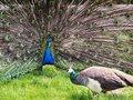 ゲスすぎる「鳥の婚活」は人間にも当てはまる! 獣医「イケメンの鳥はセックスしか頭にない」