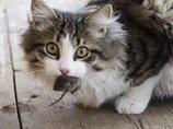 「今すぐネコを皆殺しにしろ」野生生物保護VSネコ保護でアメリカ大論争! 結論は?