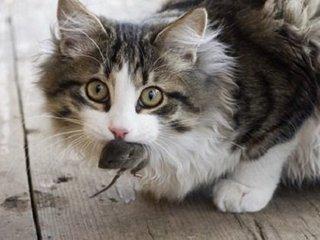【「今すぐネコを皆殺しにしろ」野生生物保護VSネコ保護でアメリカ大論争! 結論は?