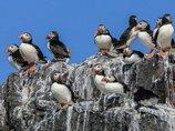 鳥の糞が北極の気温を下げていることが判明! 理学博士が緊急コメント寄せる「地球温暖化の阻止に…」(最新研究)
