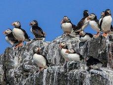 【鳥の糞が北極の気温を下げていることが判明! 理学博士が緊急コメント寄せる「地球温暖化の阻止に…」(最新研究)