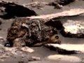 【衝撃画像】火星でナマケモノの化石が発見される! 地質学者も大胆発言「なんら不思議ではない」