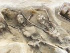 腰から歯が生えた女、人骨を栄養にする木…世界のゾッとする考古学的発見10選!