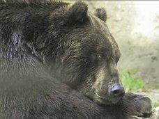 ロシア人カップルの結婚式で熊が記録係!