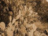"""奇習! 「神とのまじわり」を実現する伝説の秘薬 ― O県に存在したナチュラル系ドラッグ""""神丸""""とは?"""