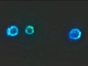 【衝撃映像】米空軍基地に3機のUFO連隊が出現! 合体、強烈発光、右往左往… 地球外飛行技術の「極秘夜間訓練」か!?