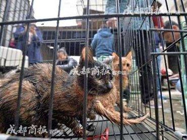 """愛猫家の恐るべき""""裏の顔""""……1日100匹を屠畜する「猫肉販売業者」だった!"""
